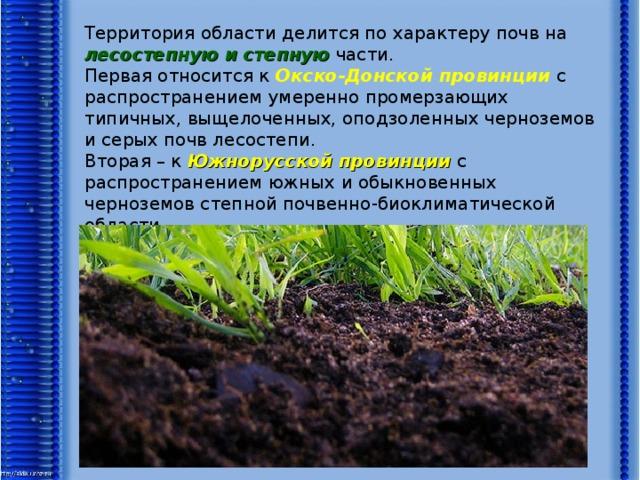 Территория области делится по характеру почв на лесостепную и степную части. Первая относится к Окско-Донской провинции с распространением умеренно промерзающих типичных, выщелоченных, оподзоленных черноземов и серых почв лесостепи. Вторая – к Южнорусской провинции с распространением южных и обыкновенных черноземов степной почвенно-биоклиматической области.