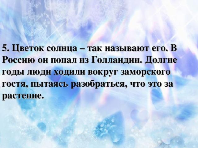 5. Цветок солнца – так называют его. В Россию он попал из Голландии. Долгие годы люди ходили вокруг заморского гостя, пытаясь разобраться, что это за растение.