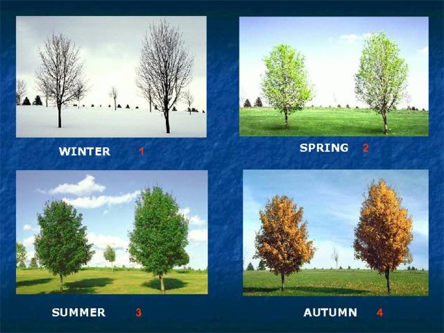 2 SPRING  1 WINTER  4 3 AUTUMN  SUMMER