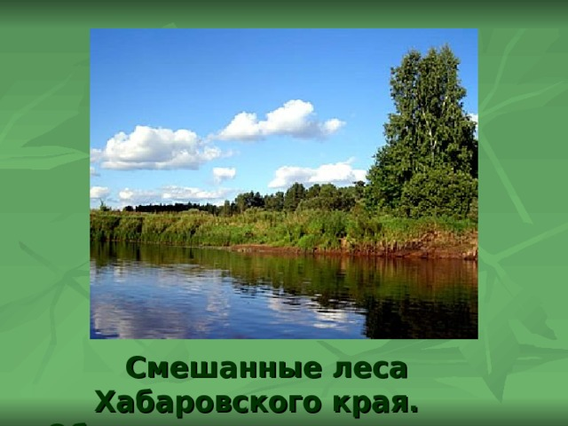Смешанные леса Хабаровского края. Обитатели смешанных лесов