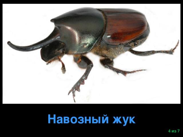 Навозный жук  из 7