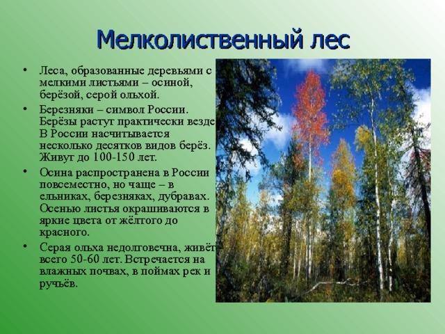 Мелколиственный лес Леса, образованные деревьями с мелкими листьями – осиной, берёзой, серой ольхой. Березняки – символ России. Берёзы растут практически везде. В России насчитывается несколько десятков видов берёз. Живут до 100-150 лет. Осина распространена в России повсеместно, но чаще – в ельниках, березняках, дубравах. Осенью листья окрашиваются в яркие цвета от жёлтого до красного. Серая ольха недолговечна, живёт всего 50-60 лет. Встречается на влажных почвах, в поймах рек и ручьёв.