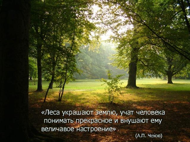 «Леса украшают землю, учат человека понимать прекрасное и внушают ему   величавое настроение»       (А.П. Чехов)