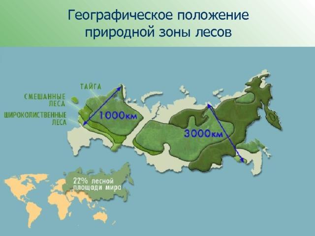 Географическое положение  природной зоны лесов