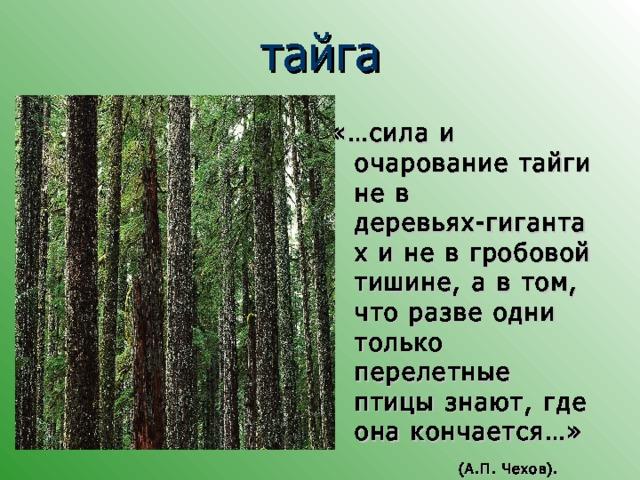 тайга «…сила и очарование тайги не в деревьях-гигантах и не в гробовой тишине, а в том, что разве одни только перелетные птицы знают, где она кончается…»    (А.П. Чехов).