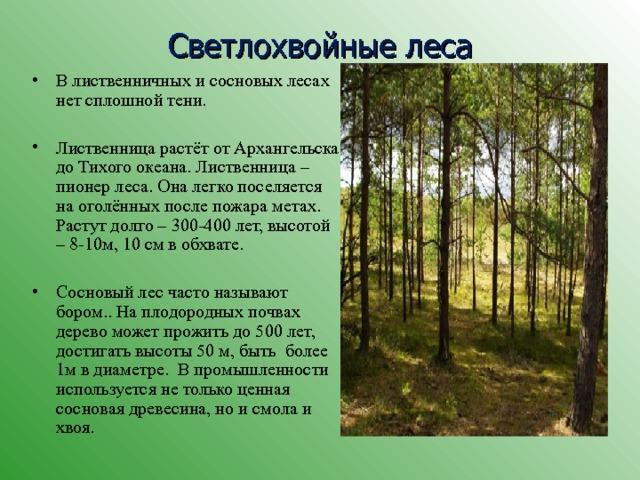 Светлохвойные леса В лиственничных и сосновых лесах нет сплошной тени. Лиственница растёт от Архангельска до Тихого океана. Лиственница – пионер леса. Она легко поселяется на оголённых после пожара метах. Растут долго – 300-400 лет, высотой – 8-10м, 10 см в обхвате.  Сосновый лес часто называют бором.. На плодородных почвах дерево может прожить до 500 лет, достигать высоты 50 м, быть более 1м в диаметре. В промышленности используется не только ценная сосновая древесина, но и смола и хвоя.