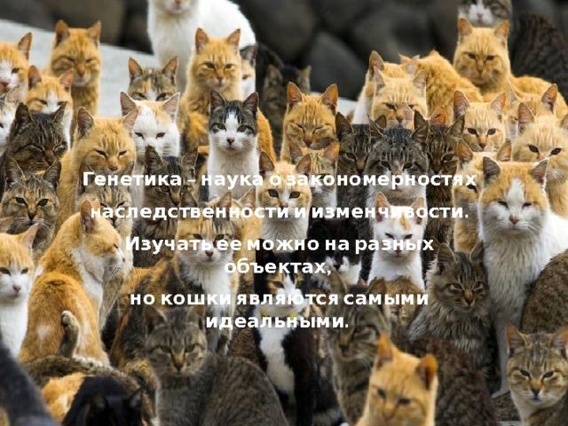 Генетика – наука о закономерностях н аследственности и изменчивости. Изучать ее можно на разных объектах, но кошки являются самыми идеальными. о