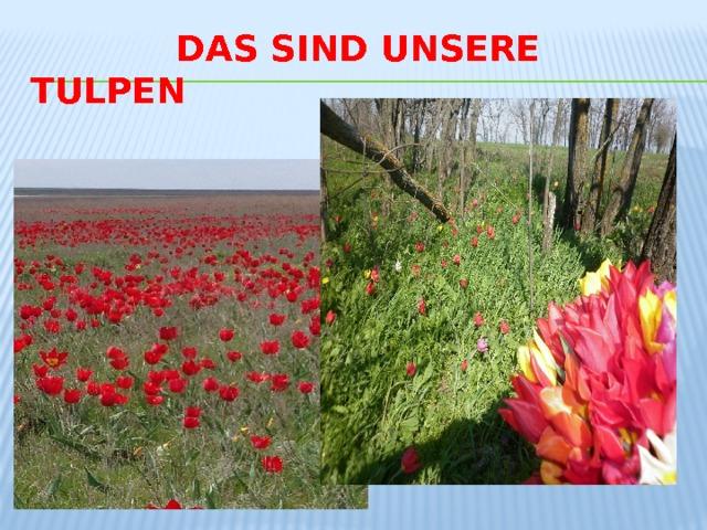 Das sind unsere tulpen