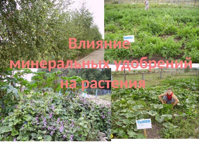 Влияние минеральных удобрений  на растения