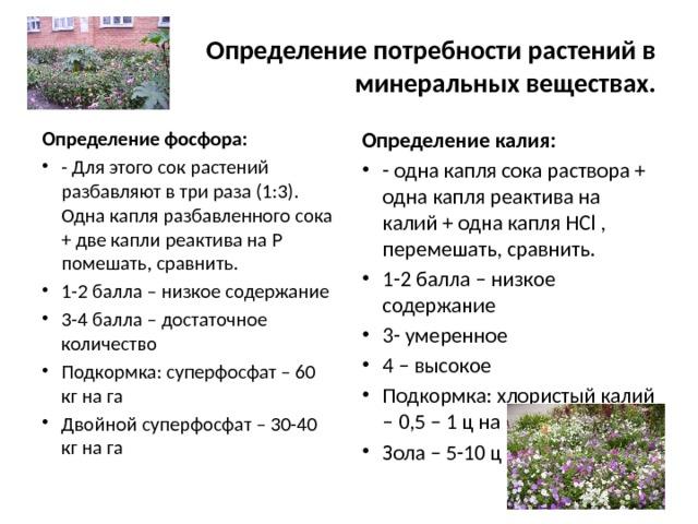 Определение потребности растений в минеральных веществах. Определение калия: Определение фосфора: - одна капля сока раствора + одна капля реактива на калий + одна капля HCl , перемешать, сравнить. 1-2 балла – низкое содержание 3- умеренное 4 – высокое Подкормка: хлористый калий – 0,5 – 1 ц на га Зола – 5-10 ц на га - Для этого сок растений разбавляют в три раза (1:3). Одна капля разбавленного сока + две капли реактива на Р помешать, сравнить. 1-2 балла – низкое содержание 3-4 балла – достаточное количество Подкормка: суперфосфат – 60 кг на га Двойной суперфосфат – 30-40 кг на га