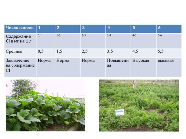Расчет результатов анализа на хлор     Число капель 1 Содержание Cl в мг на 1 л 0,1 Среднее 2 0,5 3 1-2 Заключение на содержание Cl 1,5 2-3 4 Норма 5 2,5 3-4 Норма 6 4-5 3,5 Норма 5-6 4,5 Повышенная 5,5 Высокая высокая
