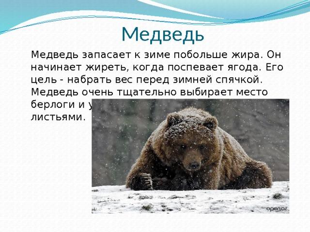 Как медведь к зиме готовится доклад 8110