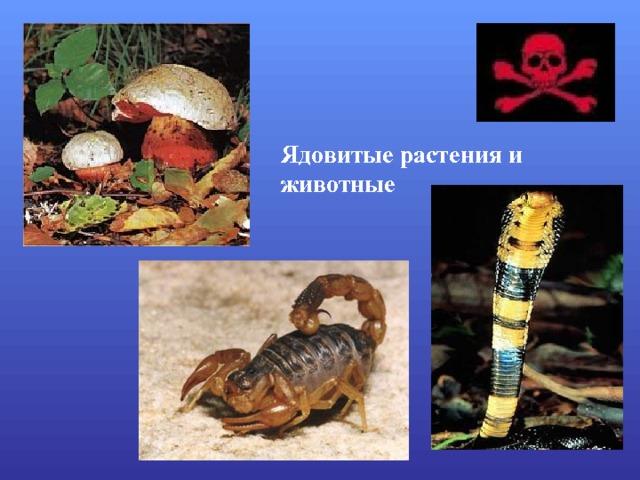 Ядовитые растения и животные