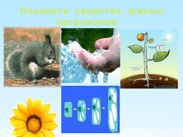 Назовите свойства живых организмов