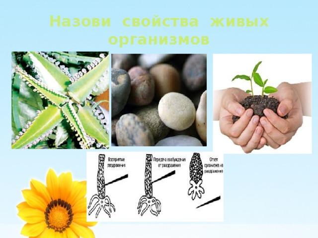 Назови свойства живых организмов