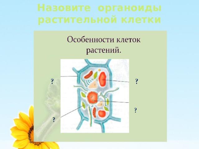 Назовите органоиды растительной клетки