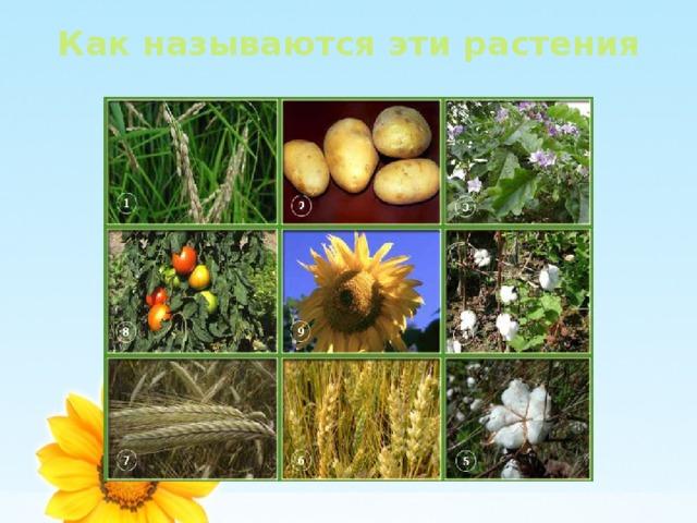 Как называются эти растения