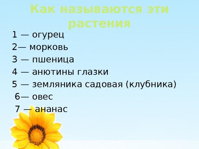 Как называются эти растения 1 — огурец 2— морковь 3 — пшеница 4 — анютины глазки 5 — земляника садовая (клубника)  6— овес  7 — ананас