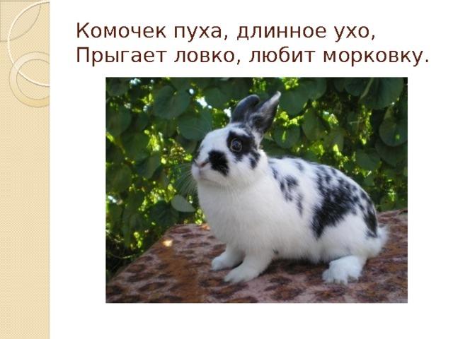 Комочек пуха, длинное ухо,  Прыгает ловко, любит морковку.