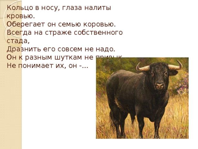 Кольцо в носу, глаза налиты кровью.  Оберегает он семью коровью.  Всегда на страже собственного стада,  Дразнить его совсем не надо.  Он к разным шуткам не привык,  Не понимает их, он -…