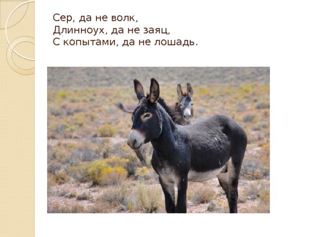 Сер, да не волк,  Длинноух, да не заяц,  С копытами, да не лошадь.