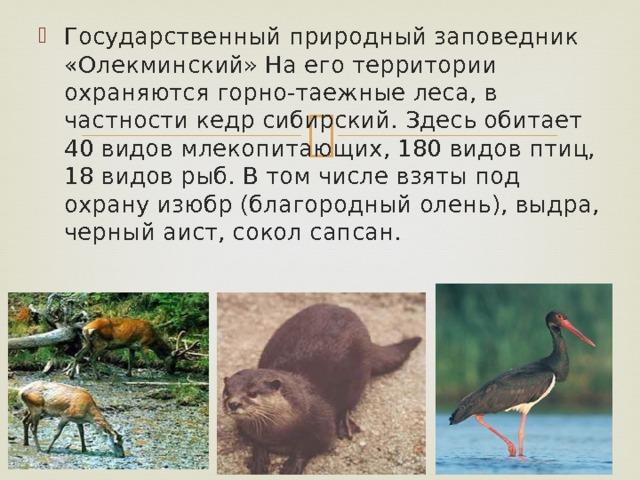 Государственный природный заповедник «Олекминский» На его территории охраняются горно-таежные леса, в частности кедр сибирский. Здесь обитает 40 видов млекопитающих, 180 видов птиц, 18 видов рыб. В том числе взяты под охрану изюбр (благородный олень), выдра, черный аист, сокол сапсан.