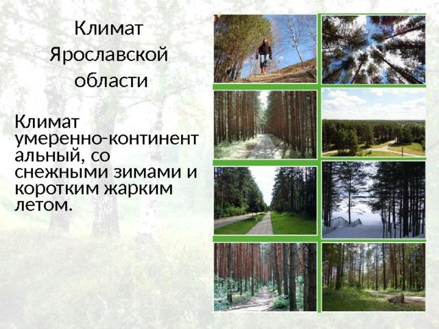 Климат Ярославской области Климат умеренно-континентальный, со снежными зимами и коротким жарким летом.