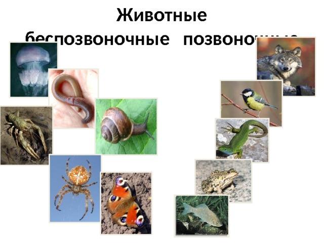 Животные  беспозвоночные позвоночные