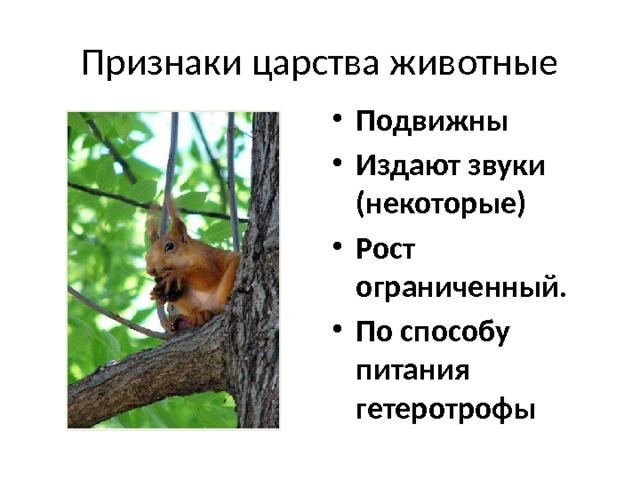 Признаки царства животные Подвижны Издают звуки (некоторые) Рост ограниченный. По способу питания гетеротрофы