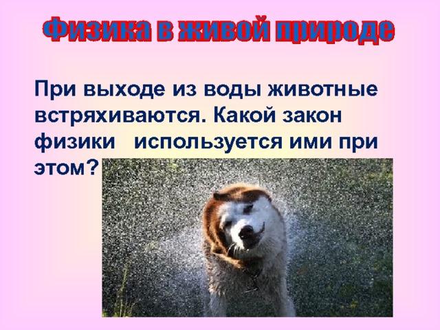 При выходе из воды животные встряхиваются. Какой закон физики используется ими при этом?