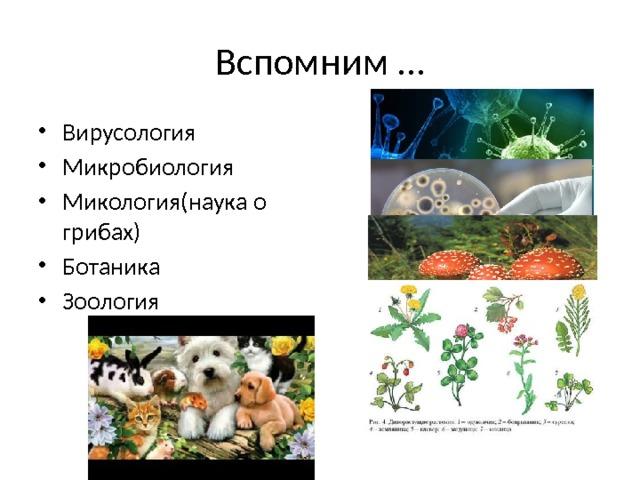 Вспомним … Вирусология Микробиология Микология(наука о грибах) Ботаника Зоология