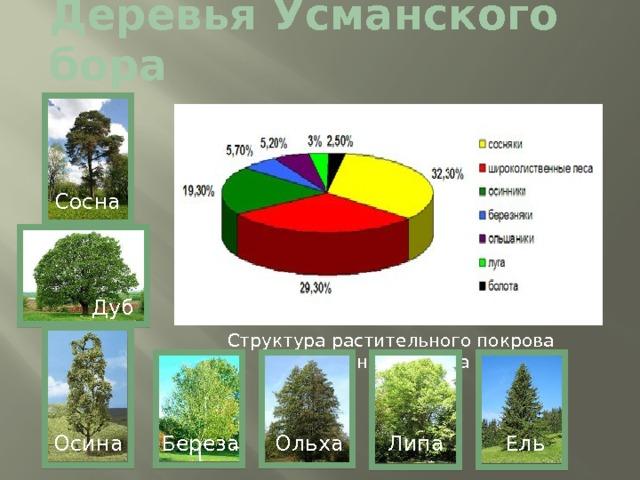 Деревья Усманского бора Сосна Дуб Структура растительного покрова Усманского бора Ель Липа Ольха Осина Береза