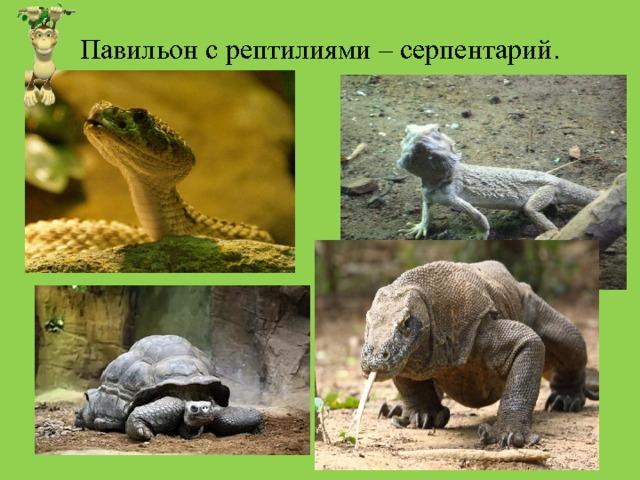 Павильон с рептилиями – серпентарий.
