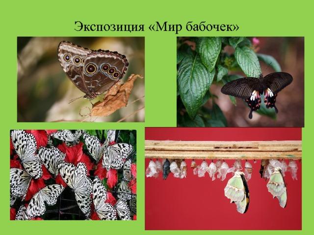 Экспозиция «Мир бабочек»