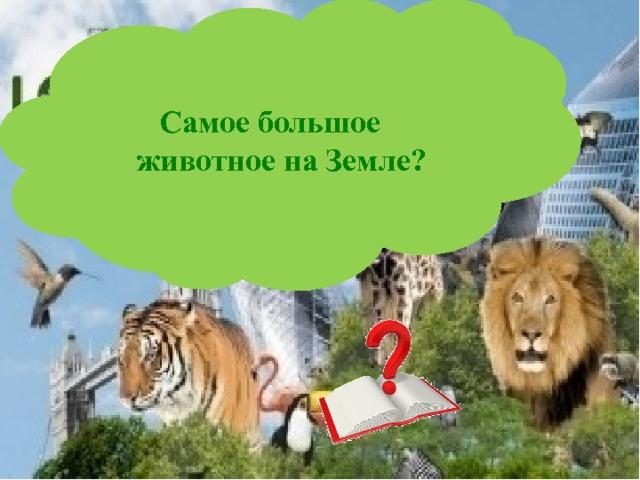 Самое большое животное на Земле?