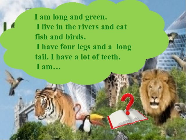 I am long and green.  I live in the rivers and eat fish and birds.  I have four legs and a long tail. I have a lot of teeth.  I am…
