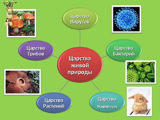 Царство Вирусов Царство Бактерий Царство Грибов Царства живой природы Царство Животных Царство Растений