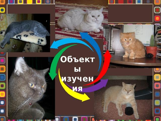 Объекты изучения Мой университет - www.edu-reforma.ru