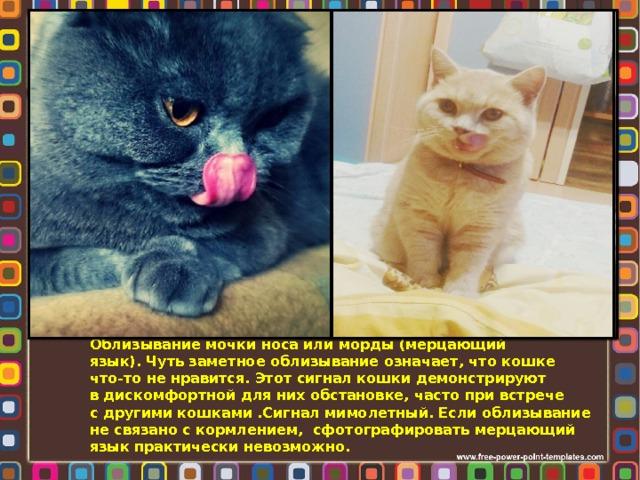 Облизывание мочки носа или морды (мерцающий  язык). Чуть заметное облизывание означает, что кошке  что-то не нравится. Этот сигнал кошки демонстрируют  в дискомфортной для них обстановке, часто при встрече  с другими кошками .Сигнал мимолетный. Если облизывание  не связано с кормлением, сфотографировать мерцающий  язык практически невозможно.