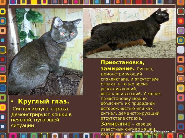 Приостановка, замирание. Сигнал, демонстрирующий спокойствие, и отсутствие страха, в то же время успокаивающий, останавливающий. У кошек приостановку можно объяснить их природной осторожностью или как сигнал, демонстрирующий отсутствие страха. Замирание – хорошо известный сигнал кошки, кошка замирает на месте. Круглый глаз.  Сигнал испуга, страха. Демонстрируют кошки в неясной, пугающей ситуации.