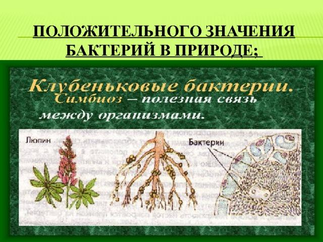 положительного значения бактерий в природе;