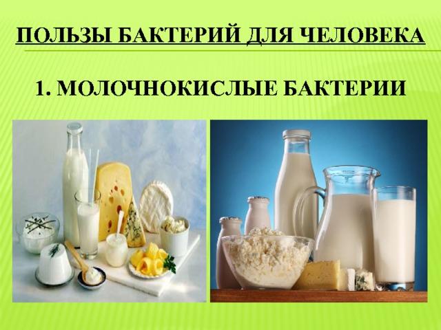 пользы бактерий для человека   1. молочнокислые бактерии