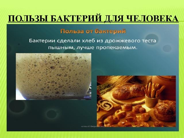 пользы бактерий для человека