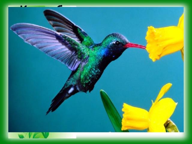 Какие биологические науки установили приведённые факты? Тропическая птичка колибри – самая маленькая среди птиц. Её тело имеет длину 3-5 см. У некоторых видов колибри острый и узкий клюв нередко превосходит длину тела. Таким клювом птицы легко добывают нектар из цветков