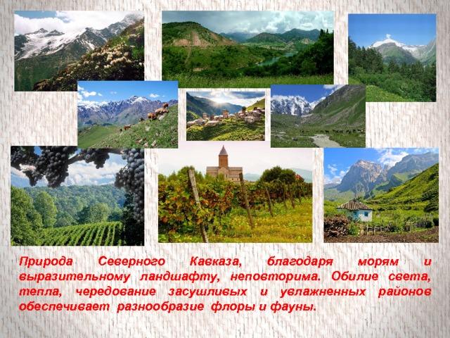 Природа Северного Кавказа, благодаря морям и выразительному ландшафту, неповторима. Обилие света, тепла, чередование засушливых и увлажненных районов обеспечивает разнообразие флоры и фауны.