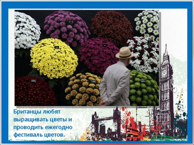 Британцы любят выращивать цветы и проводить ежегодно фестиваль цветов.