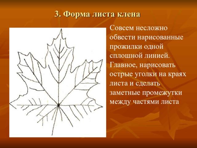 3. Форма листа клена   Совсем несложно обвести нарисованные прожилки одной сплошной линией. Главное, нарисовать острые уголки на краях листа и сделать заметные промежутки между частями листа