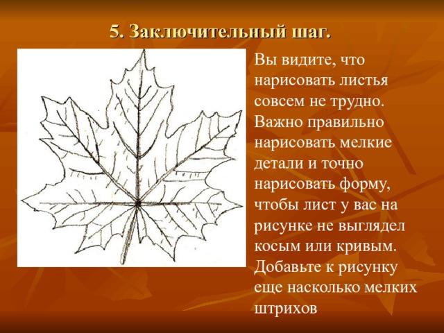5. Заключительный шаг.   Вы видите, что нарисовать листья совсем не трудно. Важно правильно нарисовать мелкие детали и точно нарисовать форму, чтобы лист у вас на рисунке не выглядел косым или кривым. Добавьте к рисунку еще насколько мелких штрихов
