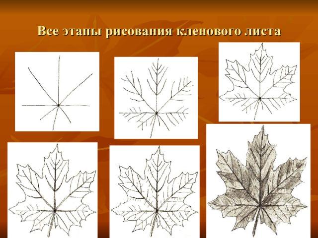 Все этапы рисования кленового листа