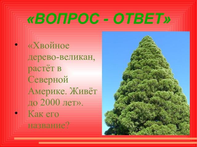 «ВОПРОС - ОТВЕТ» «Хвойное дерево-великан, растёт в Северной Америке. Живёт до 2000 лет». Как его название?